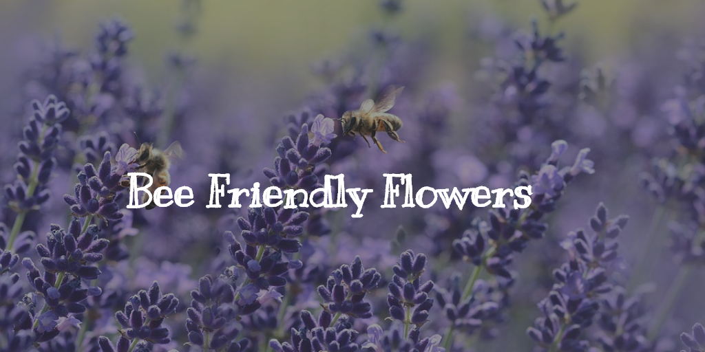 Bee Friendly Flowers